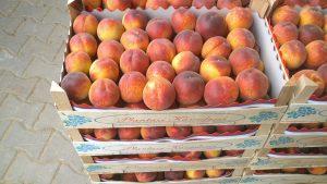 Россельхознадзор активно выявляет контрабанду плодоовощной продукции