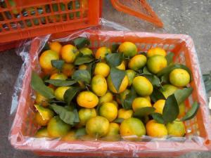 Россия запретила импорт цитрусовых из Китая