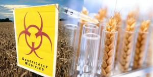 Новая доктрина безопасности вводит запрет на импорт посевного материала с ГМО