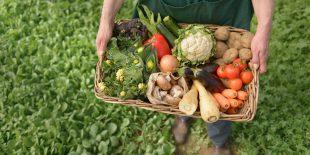 Нормативы, регулирующие производство органик-товаров